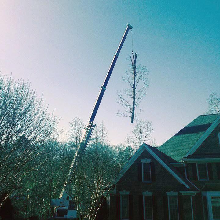 Tree Removal/Excavating
